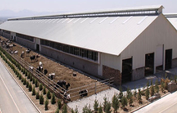 Algeria Prefabricated Steel Structure Poultry Shed